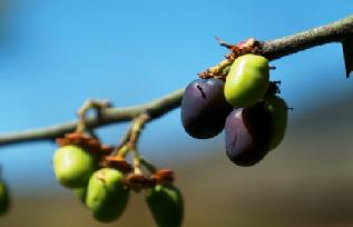 源自高山青刺果的植愈修護力,植物醫生聚焦產品研發實力守護敏感肌 媒體報道 植物醫生